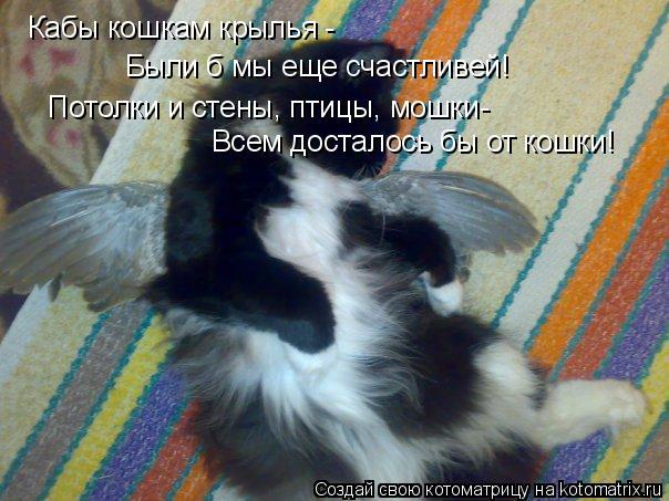 Котоматрица: Кабы кошкам крылья - Были б мы еще счастливей! Потолки и стены, птицы, мошки- Всем досталось бы от кошки!
