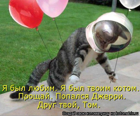 Котоматрица: Я был любим. Я был твоим котом. Прощай. Попался Джерри. Друг твой, Том.