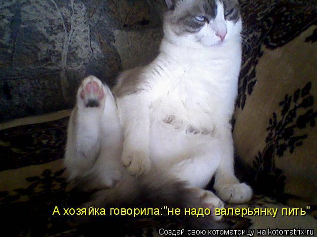 "Котоматрица: А хозяйка говорила:""не надо валерьянку пить"""