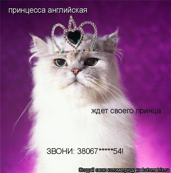Котоматрица: принцесса английская ждет своего принца ЗВОНИ: 38067*****54!
