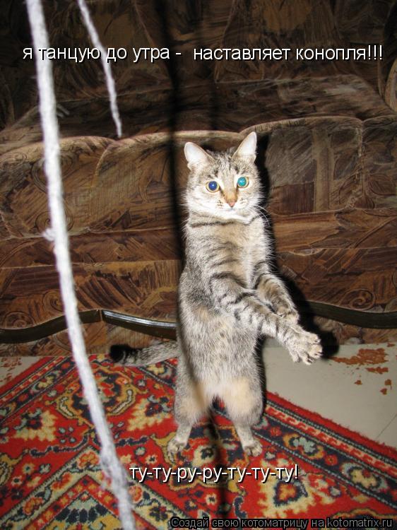 Котоматрица: я танцую до утра - наставляет конопля!!! ту-ту-ру-ру-ту-ту-ту!