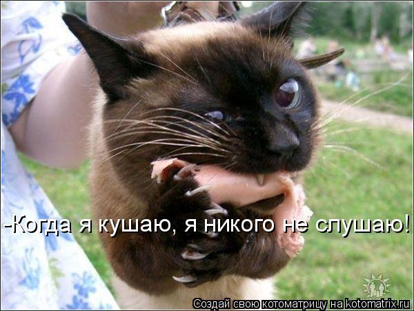 Котоматрица: -Когда я кушаю, я никого не слушаю!