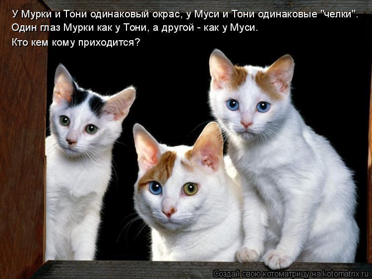 """Котоматрица: У Мурки и Тони одинаковый окрас, у Муси и Тони одинаковые """"челки"""".  Один глаз Мурки как у Тони, а другой - как у Муси. Кто кем кому приходится?"""