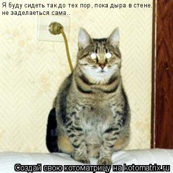 Котоматрица: Я буду сидеть так до тех пор, пока дыра в стене. не заделаеться сама..
