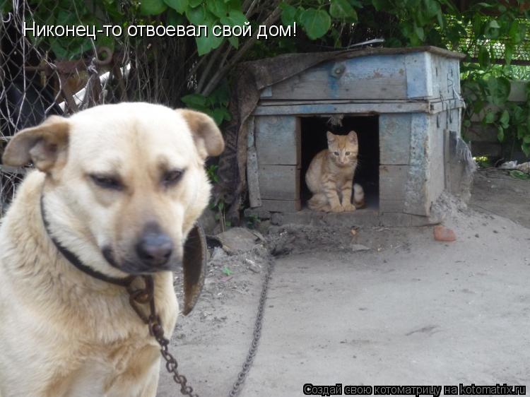 Котоматрица: Никонец-то отвоевал свой дом!