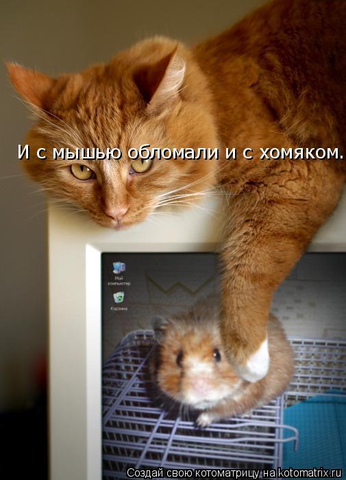 Котоматрица: И с мышью обломали и с хомяком.