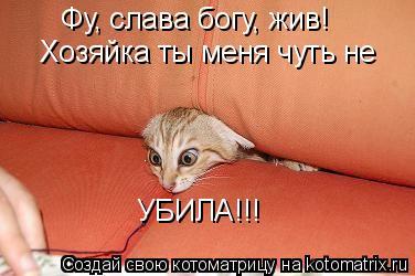Котоматрица: Фу, слава богу, жив! Хозяйка ты меня чуть не  УБИЛА!!!