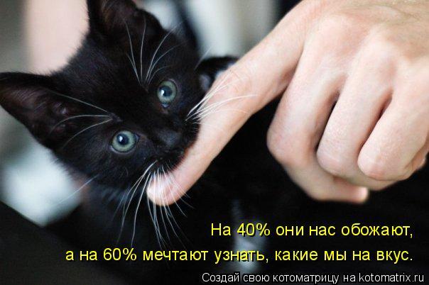 Котоматрица: На 40% они нас обожают,  а на 60% мечтают узнать, какие мы на вкус.