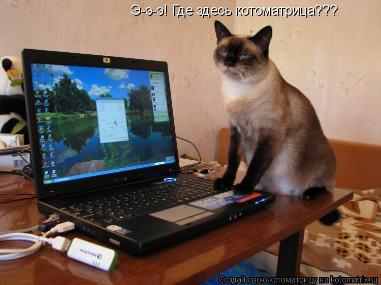 Котоматрица: Э-э-э! Где здесь котоматрица???