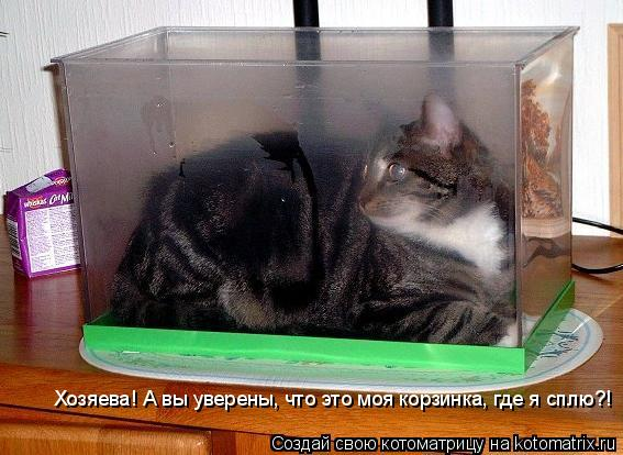 Котоматрица: Хозяева! А вы уверены, что это моя корзинка, где я сплю?!