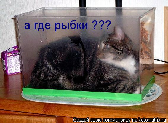 Котоматрица: а где рыбки ???