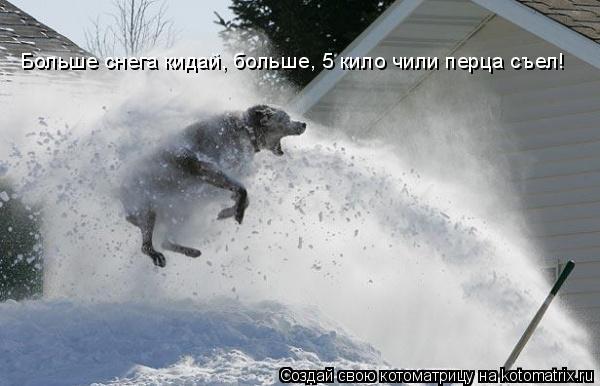 Котоматрица: Больше снега кидай, больше, 5 кило чили перца съел!