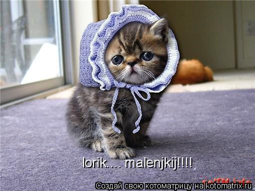 Котоматрица: lorik.... malenjkij!!!!