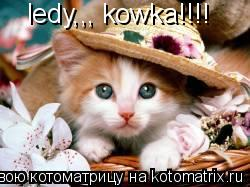Котоматрица: ledy,,, kowka!!!!
