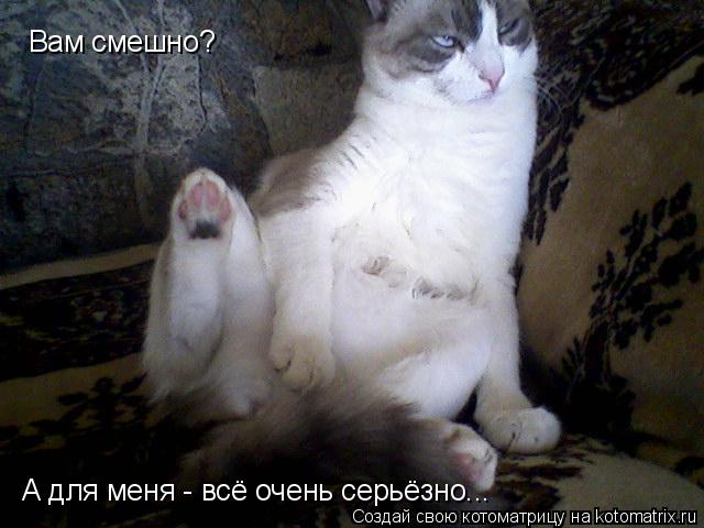 Котоматрица: Вам смешно? А для меня - всё очень серьёзно...