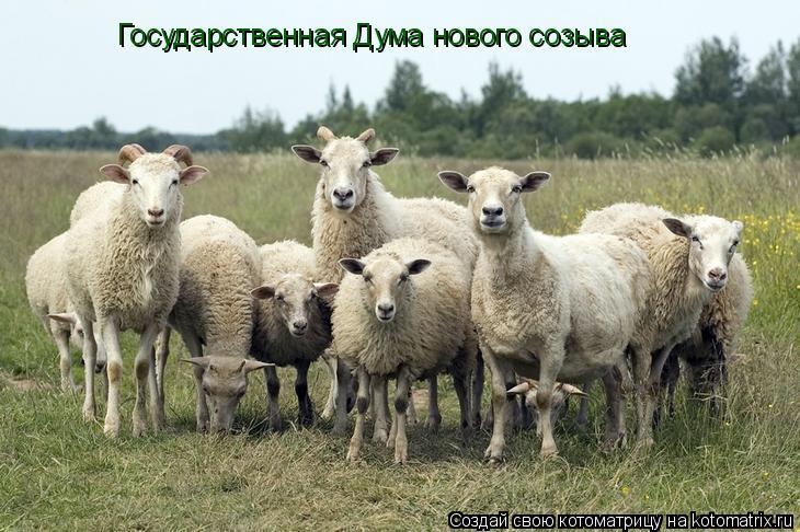 Котоматрица: Государственная Дума нового созыва