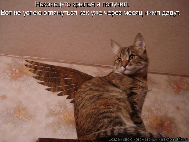 Котоматрица: Наконец-то крылья я получил. Вот не успею оглянуться как уже через месяц нимп дадут.