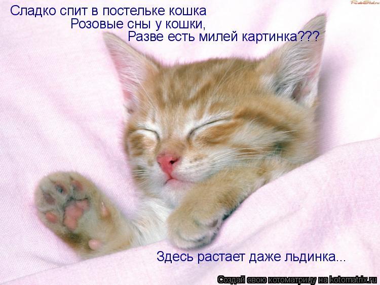 Котоматрица: Сладко спит в постельке кошка Сладко спит в постельке кошка Розовые сны у кошки, Разве есть милей картинка??? Здесь растает даже льдинка...