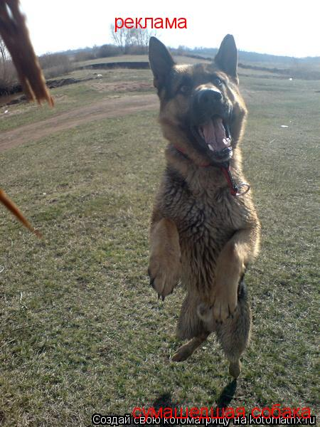 Котоматрица: реклама сумашедшая собака