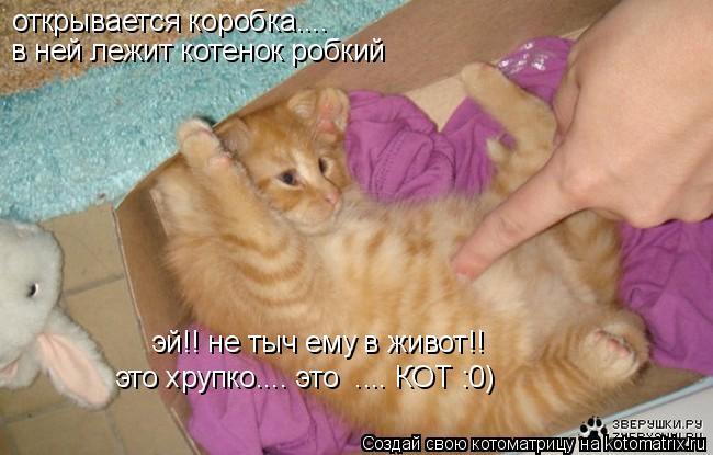 Котоматрица: открывается коробка.... в ней лежит котенок робкий эй!! не тыч ему в живот!! это хрупко.... это  .... КОТ :0)