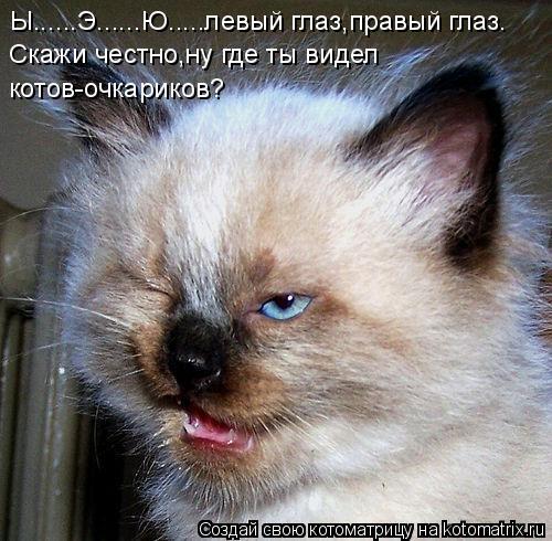 Котоматрица: Ы......Э......Ю.....левый глаз,правый глаз. Скажи честно,ну где ты видел  котов-очкариков?