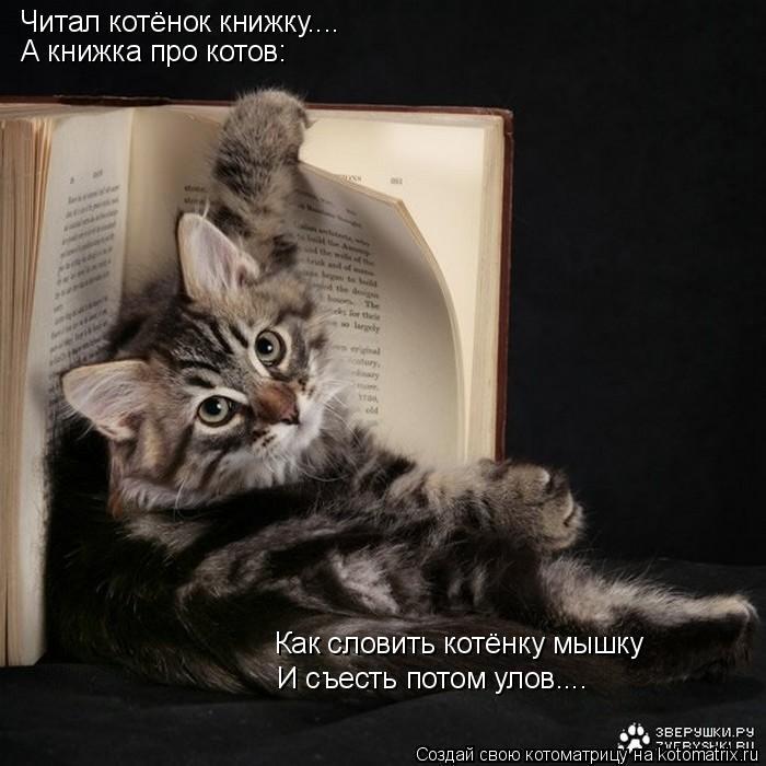 Котоматрица: Читал котёнок книжку.... А книжка про котов: Как словить котёнку мышку И съесть потом улов....