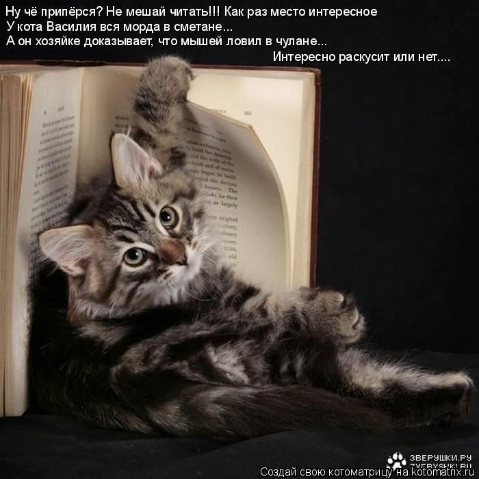 Котоматрица: Ну чё припёрся? Не мешай читать!!! Как раз место интересное У кота Василия вся морда в сметане... А он хозяйке доказывает, что мышей ловил в чул