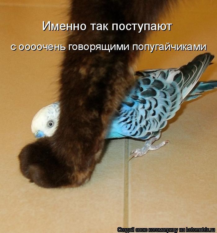 Котоматрица: Именно так поступают с оооочень говорящими попугайчиками