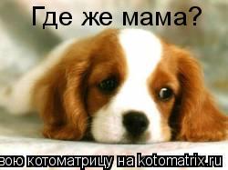 Котоматрица: Где же мама?