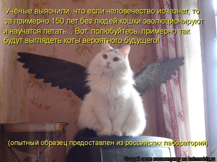 Котоматрица: Учёные выяснили, что если человечество исчезнет, то и научатся летать... Вот, полюбуйтесь, примерно так за примерно 150 лет без людей кошки эво
