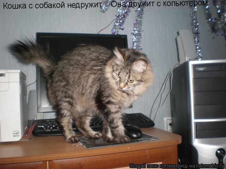 Котоматрица: Кошка с собакой недружит .  Она дружит с копьютером