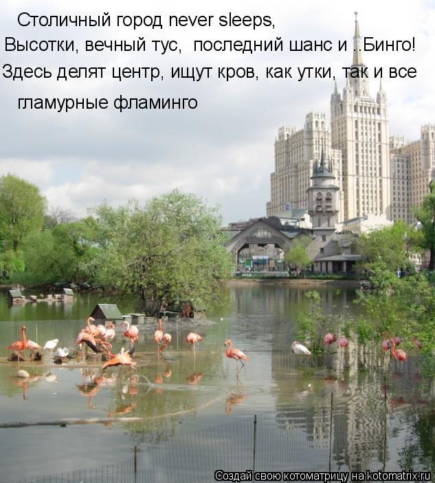 Котоматрица: Столичный город never sleeps, гламурные фламинго Здесь делят центр, ищут кров, как утки, так и все Высотки, вечный тус,  последний шанс и ..Бинго!