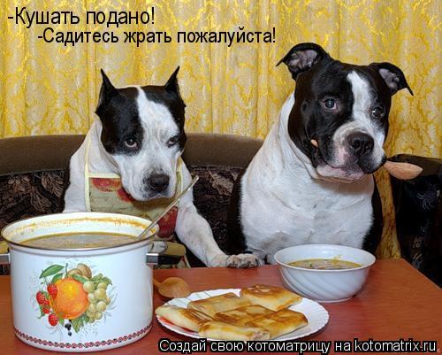 Котоматрица: -Кушать подано! -Садитесь жрать пожалуйста!