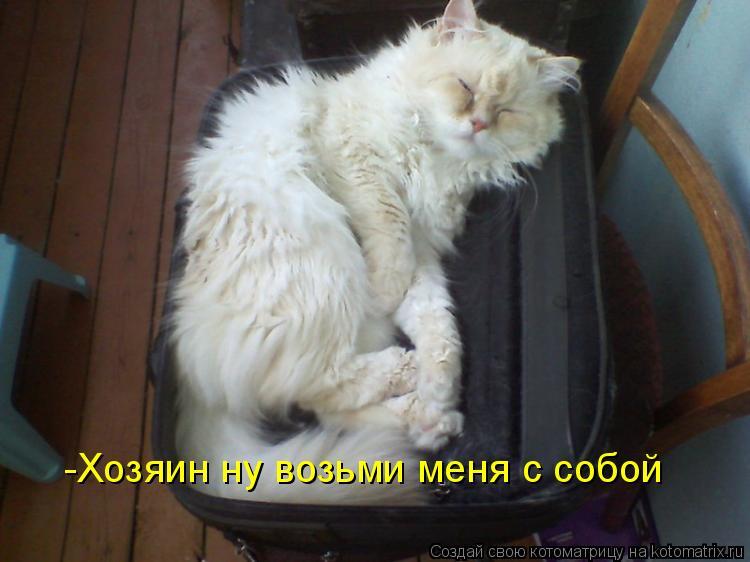 Котоматрица: -Хозяин ну возьми меня с собой