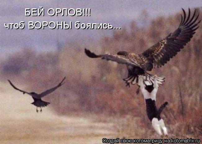 Котоматрица: БЕЙ ОРЛОВ!!! чтоб ВОРОНЫ боялись...