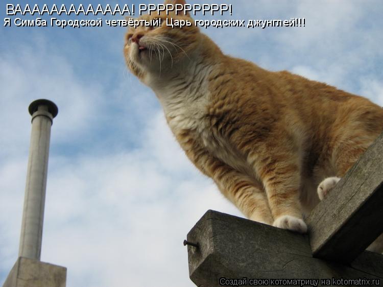 Котоматрица: ВААААААААААААА! РРРРРРРРРР! Я Симба Городской четвёртый! Царь городских джунглей!!!