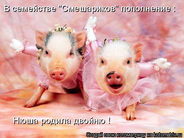 """Котоматрица: В семействе """"Смешариков"""" пополнение : В семействе """"Смешариков"""" пополнение : Нюша родила двойню !"""