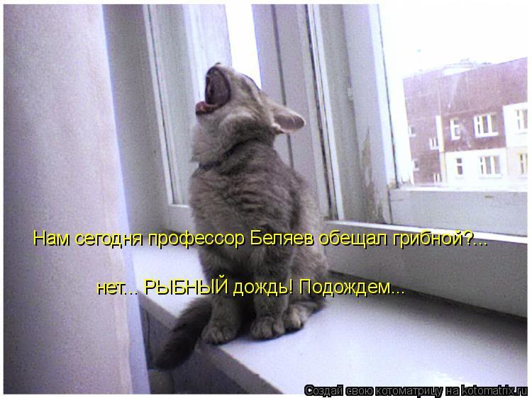 Котоматрица: Нам сегодня профессор Беляев обещал грибной?... нет... РЫБНЫЙ дождь! Подождем...