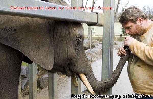 Котоматрица: Сколько волка не корми, а у слона все равно больше.
