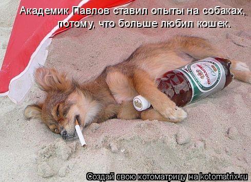 Котоматрица: Академик Павлов ставил опыты на собаках,  потому, что больше любил кошек.