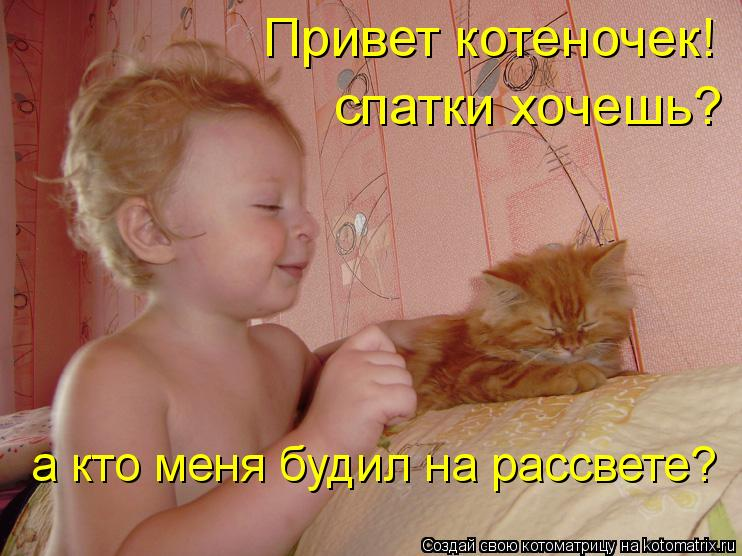 Котоматрица: Привет котеночек! спатки хочешь? а кто меня будил на рассвете?