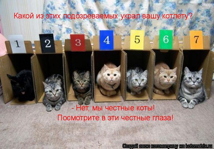 Котоматрица: Какой из этих подозреваемых украл вашу котлету? - Нет, мы честные коты!  Посмотрите в эти честные глаза!