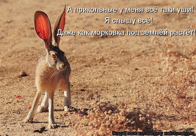 Котоматрица: А прикольные у меня всё таки уши! Я слышу всё! Даже как морковка под землёй растёт!