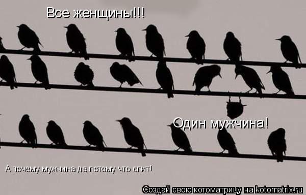 Котоматрица: Все женщины!!! Один мужчина! А почему мужчина да потому что спит!