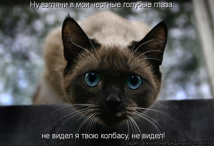 Котоматрица: Ну взгляни в мои честные голубые глаза: не видел я твою колбасу, не видел!