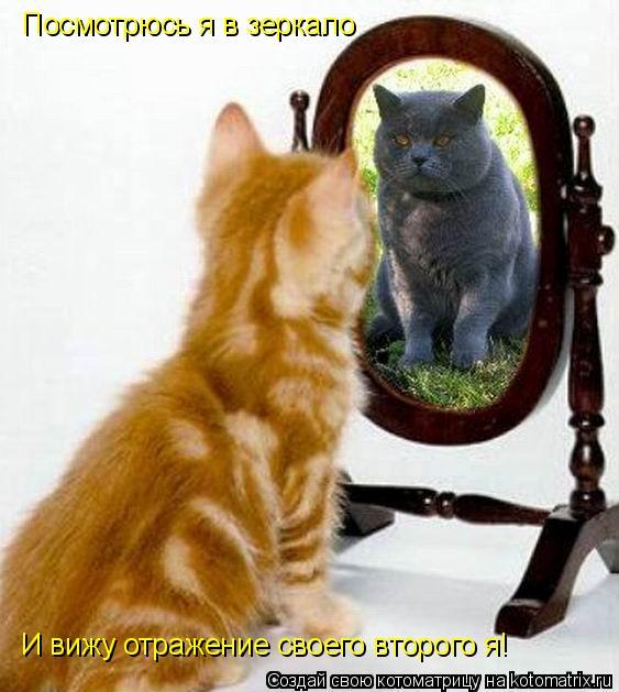 Котоматрица: Посмотрюсь я в зеркало И вижу отражение своего второго я!