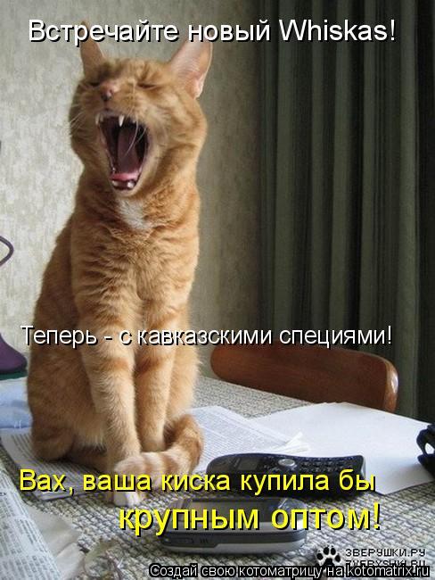 Котоматрица: Встречайте новый Whiskas! Теперь - с кавказскими специями! Вах, ваша киска купила бы крупным оптом!