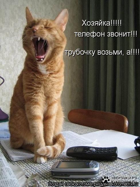 Котоматрица: Хозяйка!!!!! телефон звонит!!! трубочку возьми, а!!!!!!
