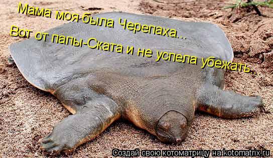 Котоматрица: Мама моя была Черепаха...  Вот от папы-Ската и не успела убежать...