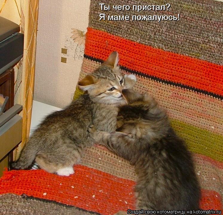 Котоматрица: Ты чего пристал? Я маме пожалуюсь!